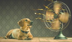 Picture of a dog in front of a table fan.